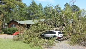 Daves Tree Service cabin