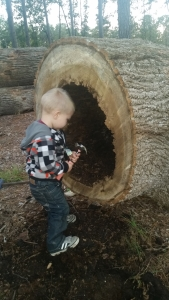 Dave's Tree Service Helpers with a Hollow Tree
